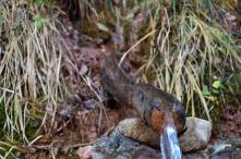Dovžanova soteska - Fresh Drinkable Water from the Mountains Spring, Autumn 2014