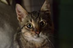 A Curious Little Kitty, December 2014