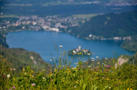Beautiful Wild Flowers with Lake Bled and the City in the back