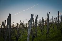 Beautiful Vineyard in Sevnica, Slovenia