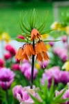 Beautiful Orange Bloom