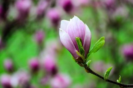 Lovely Tree Blossom