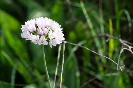 Beautiful Flowers in Sečovlje