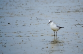 Curious Shorebird in the Salt Field