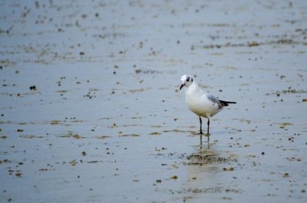 Curious Shorebird in the Salt Field
